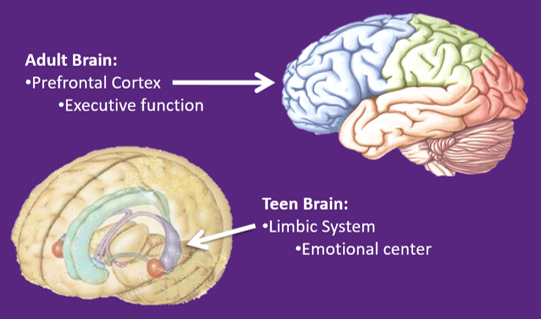 The Adolescent Brain Why Executive >> Teen Guide Asking Parents Permission Pro Car Seat Safety